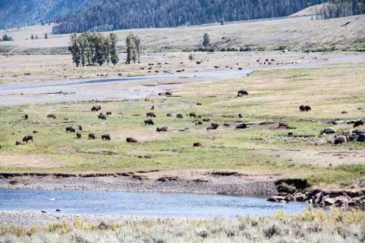 20130807_Yellowstone_057s